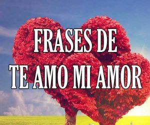 Frases de te amo mi amor