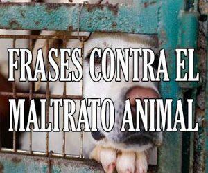 Frases De Mascotas Y Animales Para Reflexionar Contra El