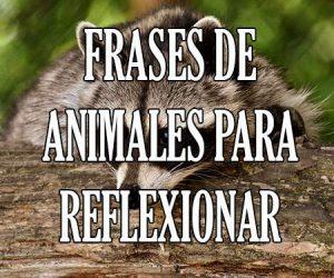 Frases de Animales para Reflexionar