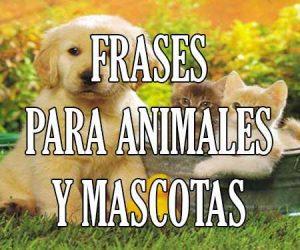 frases para animales y mascotas