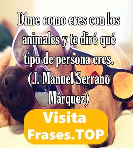Frases De Mascotas Y Animales Para Reflexionar Y Contra El Maltrato