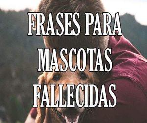 Frases para Mascotas Fallecidas