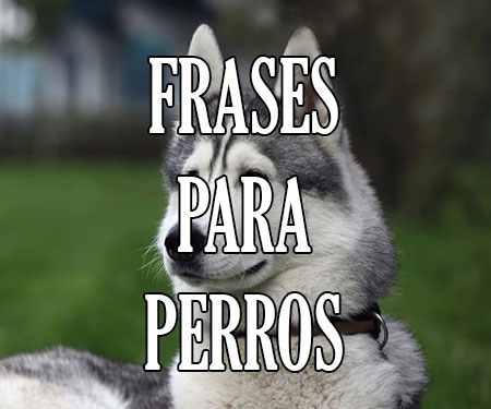Frases De Perros Dedicadas A Perros Amigos Que Amas Cortas