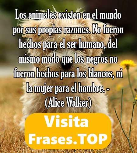 frases contra el maltrato animal