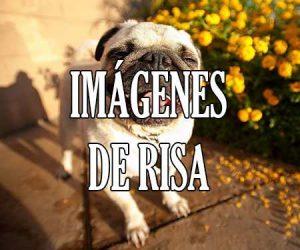 Imagenes de Risa