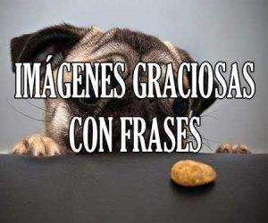 Imagenes Graciosas con Frases