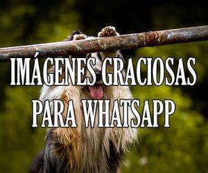 Imagenes Graciosas para Whatsapp