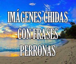Imagenes Chidas con Frases Perronas