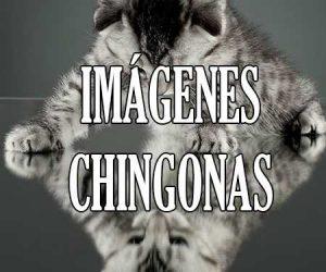 Imagenes Chingonas