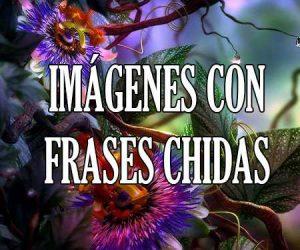 Imagenes con Frases Chidas
