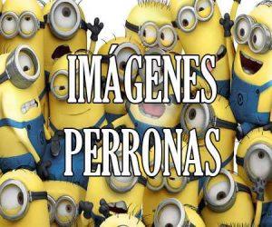 Imagenes Perronas