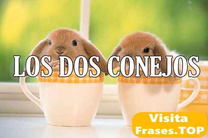 los dos conejos
