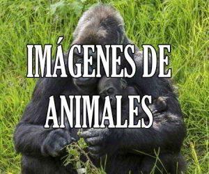 Fotos e Imágenes de Animales