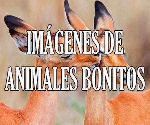 Imágenes de Animales Bonitos