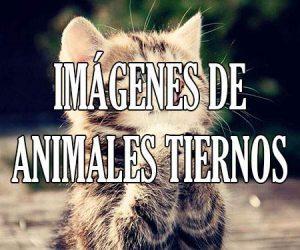 Imágenes de Animales Tiernos