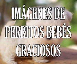 Imagenes de Perritos Bebes Graciosos