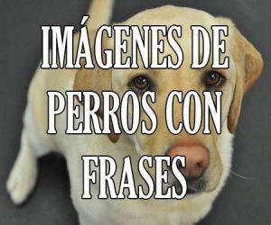 Imagenes de Perros con Frases