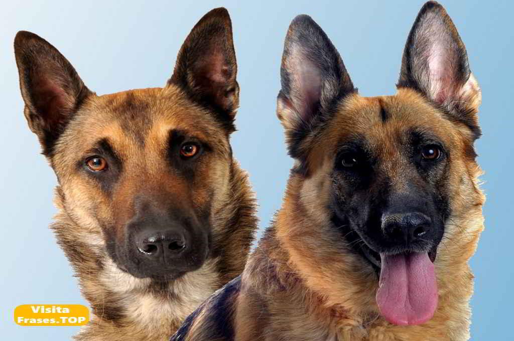 Imágenes De Perros Fotos De Perritos Tiernos De Raza