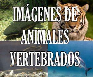 Fotos e Imágenes de Animales Vertebrados