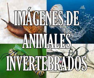 fotos e imagenes de animales invertebrados