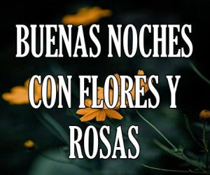 buenas noches con flores y rosas