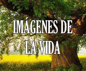 Imagenes de la Vida